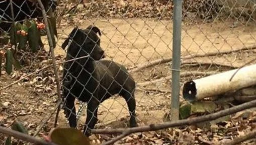 This petition comes after a video showed pit bulls tethered in a Mount Healthy yard in extreme weather.