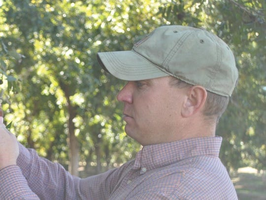 Homeowners and others who own only a few trees can do a lot to aid the commercial pecan industry, says Hoby Bonham of Bonham Farms in Chaves County, if they will educate themselves about the pest and check their pecans for signs of weevil infestation. Bonham is pictured in his orchard in Chaves County.