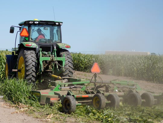 Farmer Tim Novotny, of Wahoo, shreds male corn plants