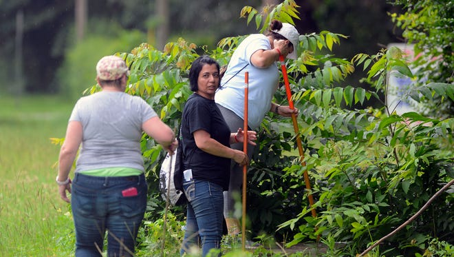Volunteers search for Naomi Jones Saturday, June 3, 2017. Naomi Jeanell Jones was last seen Wednesday afternoon in the area of Aspen Village Apartments, 1460 E. Johnson Ave. Agencies including the Escambia County Sheriff's Office, the Florida Department of Law Enforcement, the FBI and the KlaasKids Foundation have spent countless hours searching for the 12-year-old, and the search efforts will continue into the weekend.