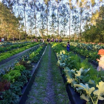 Temple Beit HaYam LatkeFest, Kai Kai Farm events highlight holiday food