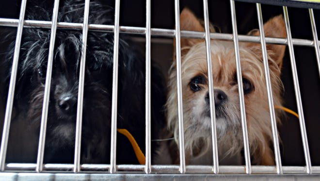 Nearly 200 animals were rescued from a home in southwestern Greene County.