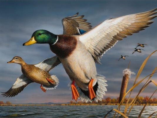 636411687596168494-Federal-Duck-Stamp-winner-2017-contest.jpg
