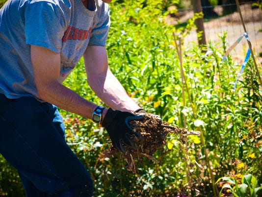 Is it good to mulch your perennial flower bed perennials not thriving try mulch mightylinksfo