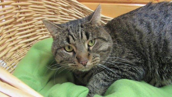 Tiny is the Animal Control Pet of the Week.