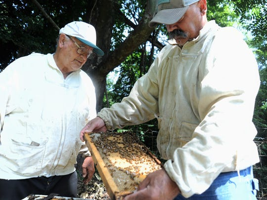 Edd Buchanan, left, and his son Eddy examine a hive from their beekeeping operation in Black Mountain. Edd, who has had a booth at every Sourwood Festival since it began, will not be in his familiar spot along Sutton Avenue this year.