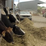 Milking cows at an area dairy.