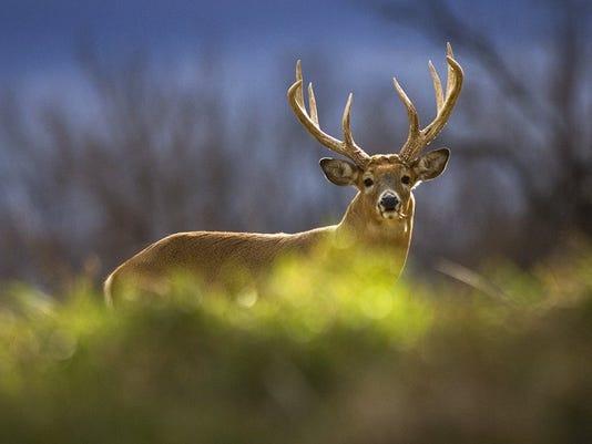 636107412616845218-Deer-Problems-Me-2-1-UVA58518-L575568742.JPG