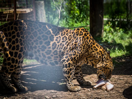 The Exotic Feline Rescue Center is home to more than