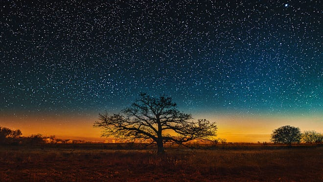 Bright starry night on an alone oak upon the Wisconsin prairie.