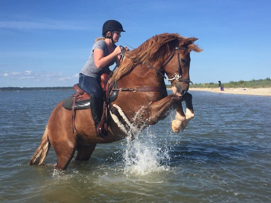 Chance, a 2007 Pony Penning foal, rears on command of rider Eden Rice in Assateague Bay on Sunday, September 25. Rice won the pony, a foal of the late Surfer Dude and a donation by the Chincoteague Volunteer Fire Co., by writing an essay on why she deserved a Chincoteague pony foal.