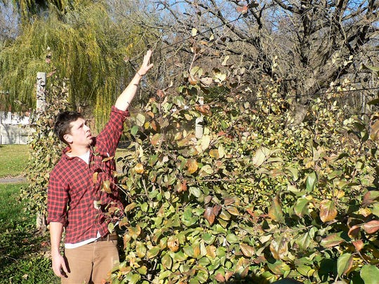 Drew Ten Eyck stands next to a dwarf apple tree that is now being planted in many Wisconsin orchards.