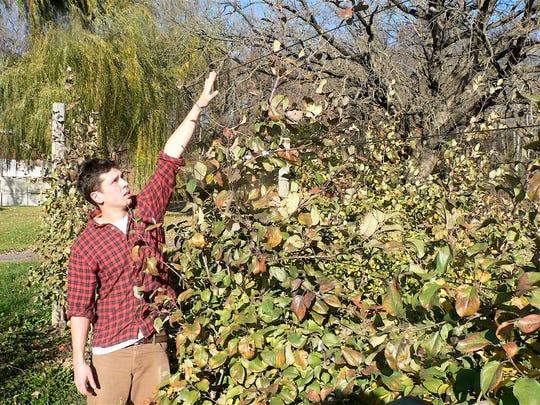 Drew Ten Eyck stands next to a dwarf apple tree that