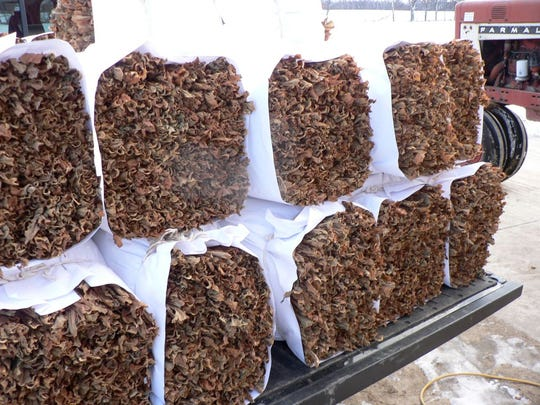 Forty-pound bundles of tobacco leaves ready for delivery