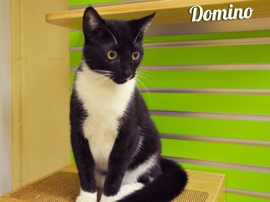 Domino#691637