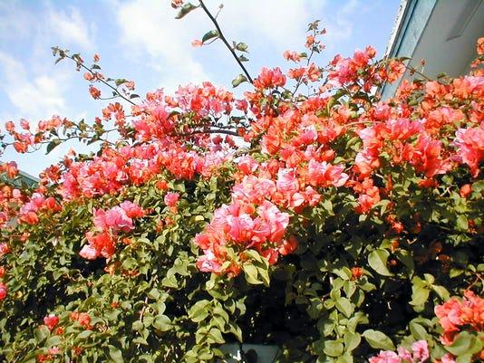 636257842415954160-Gardening.jpg