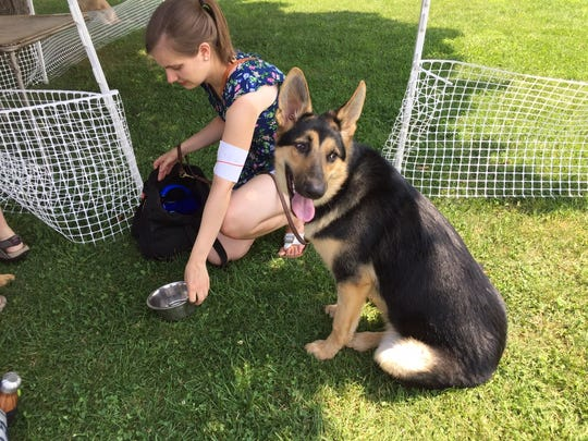 Adriana Shubeck of Chatham gives water to her Seeing Eye pup, 8-month-old Irene. Shubeck and Irene were at the Morris County 4-H Fair to allow Irene to socialize at the Fair.