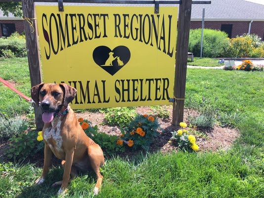 636385713155056125-Clear-the-shelter-Bella-the-dog.jpg