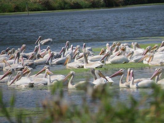 WSF 0922 NRCS Baraboo wetlands 4