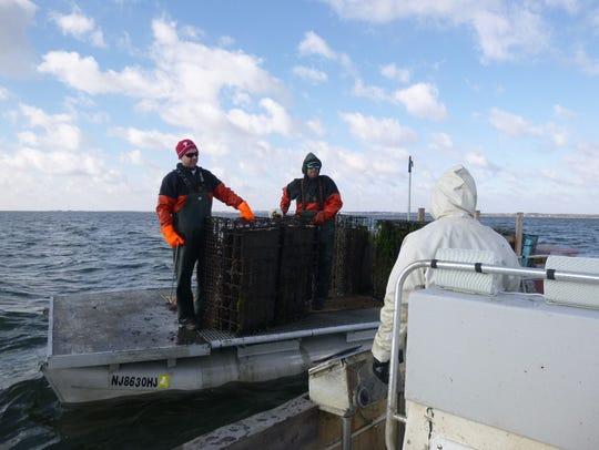 Oyster farmers Matt and Scott Hender discuss recovery