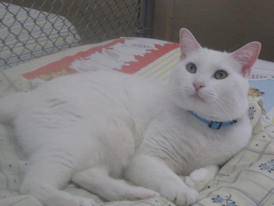 Nilla can be seen at Sun Cities 4 Paws shelter, 10807
