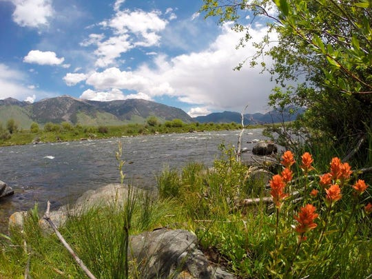 FILE - In this June 15, 2015, file photo, Indian paintbrush adorns the bank of the upper Madison River with the Madison mountain range rising in the distance near Ennis, Mont. The Montana Fish and Wildlife Commission on Thursday, April 19, 2018, rejected a plan to limit commercial fishing guides on the popular and crowded river. Outfitters and guides generally agreed something needs to be done to address the river crowding, but said it shouldn't focus only on them when private anglers make up 87 percent of the users annually. (Brett French/The Billings Gazette via AP, file)