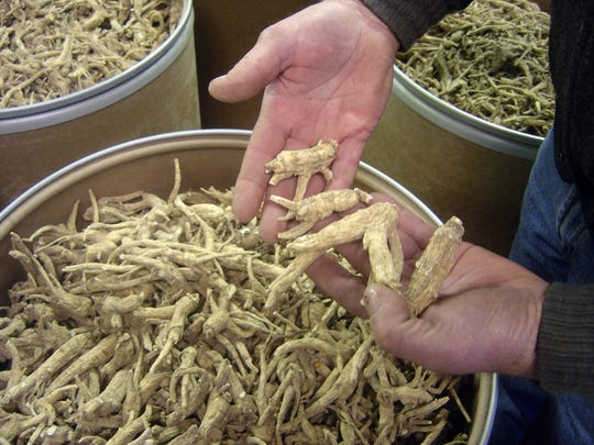 There are more than 185 ginseng producers in the Marathon