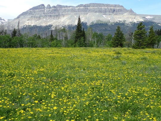 Meadow of wildflowers with Flattop along the way on
