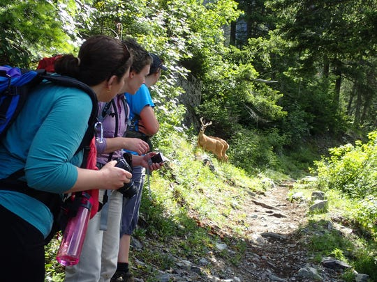Always give wildlife the right away when hiking in Glacier National Park.