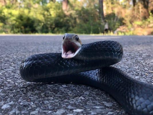 636676267539747154-Snake.jpg