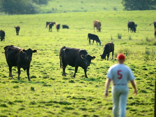 Grazing cows perk up as Manchester assistant coach Spark Shuman retrieves a foul ball during Game 3 of the Central League Finals in Manchester Tuesday, August 20, 2013. Jefferson won 11-1.  DAILY RECORD/SUNDAY NEWS - KATE PENN