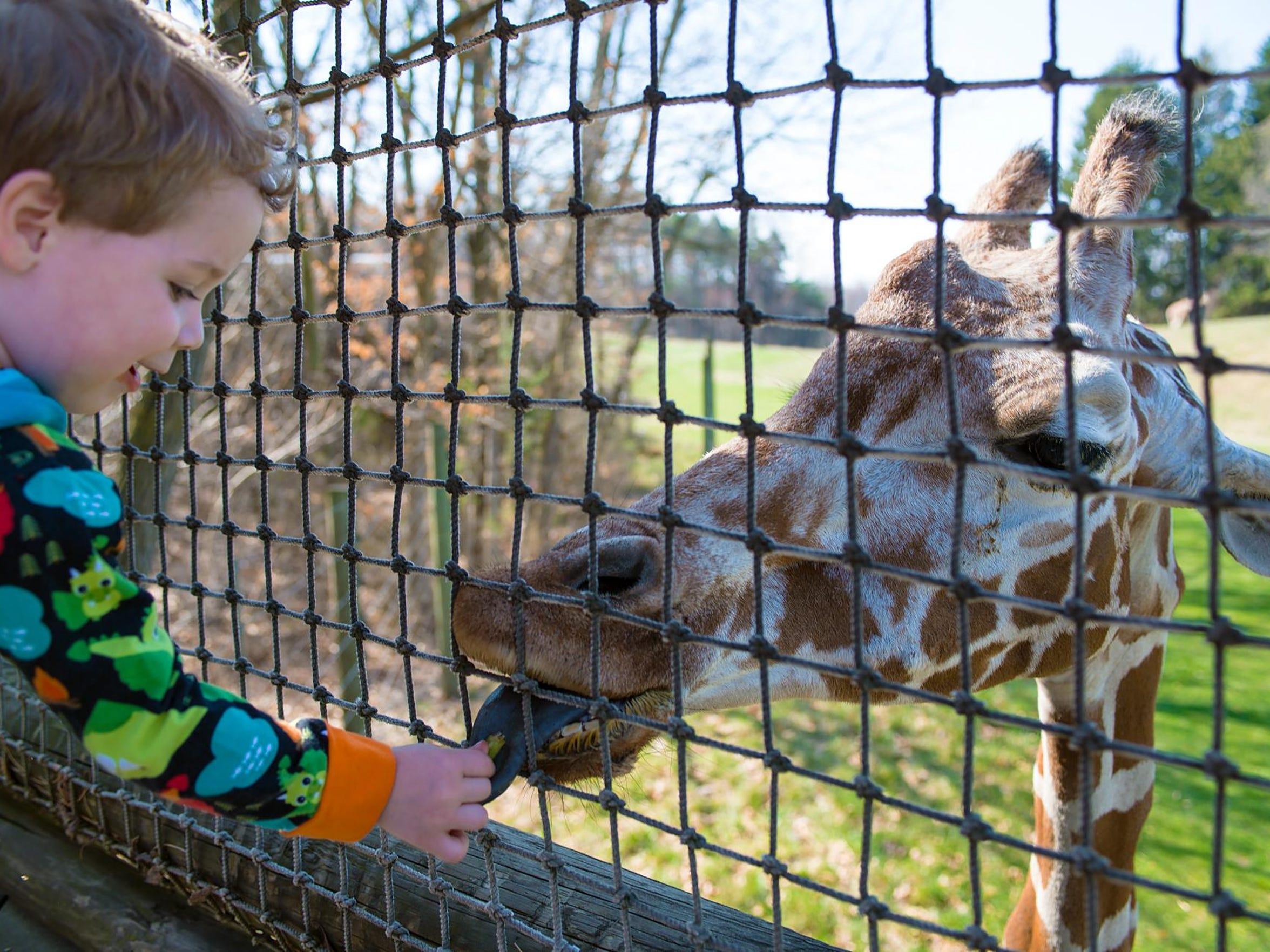 Raiden Stanton feeds a giraffe at Binder Park Zoo.