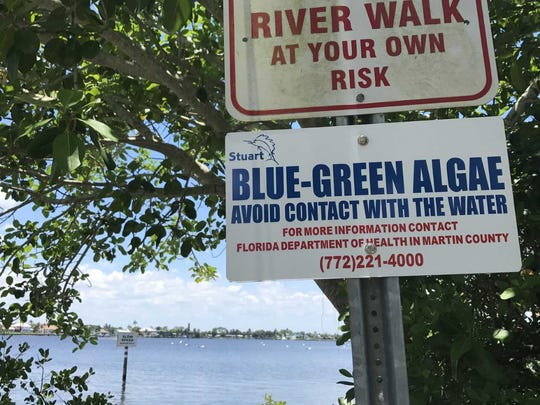 Stuart has installed signs along the city's waterfront warning people about the health hazards of blue-green algae, like this one at Shepard Park.