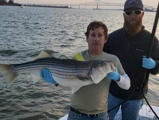 Delaware regional fishing report for Seven b s fishing report