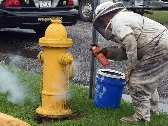 Beekeeper  Ray Hebert sprays a fire hydrant Thursday afternoon with poison after removing a giant bee hive that had attached itself to the hydrant that is located on Stardust Street near Creswell Lane. See more photos on the Daily World Facebook page.