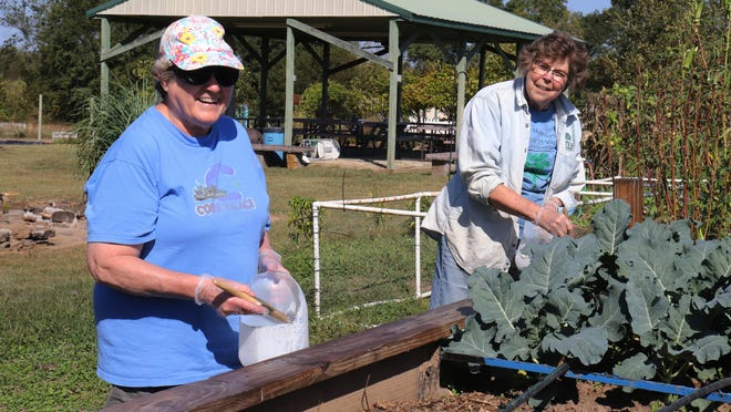 Master Gardeners Sharon McCord, left, and Mary Smith, work on a raised garden bed Saturday at The Learning Fields in Chaffee Crossing.