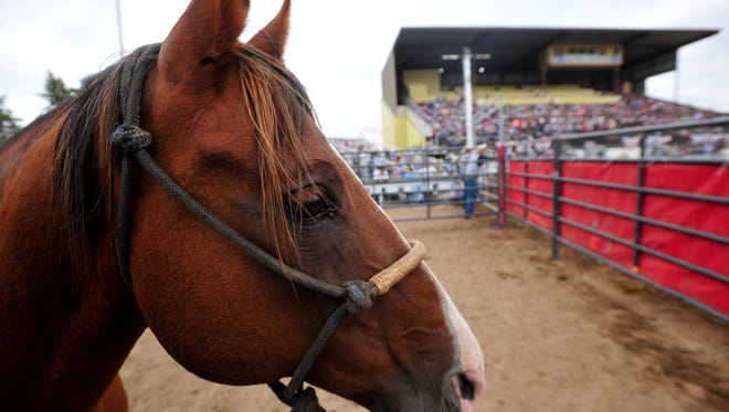 One of the pickup-men's spare horse watches the action during the Big Sky Pro Rodeo at the Montana State Fair.