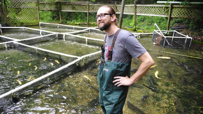 Trey Cioccia of The Farm House Restaurant stands in the water at Bob White Springs trout farm. Cioccia get his fresh fish from this farm hours after it is harvested.