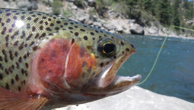 The fishing report for Aug. 11