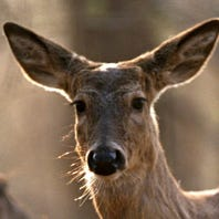 Hunters must change approach, help stall CWD from spreading to humans