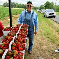 Sumner County strawberry crops hurt by weather