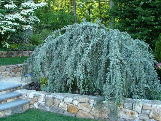 Small trees for a garden for Ornamental trees for small gardens