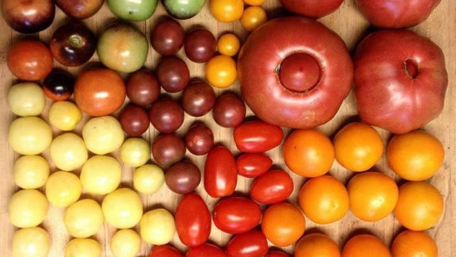 Tomatoes in every shade await the Tomato Feastival.