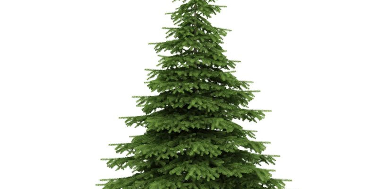 Cut your own Christmas tree around