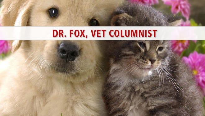 webkey dr. fox