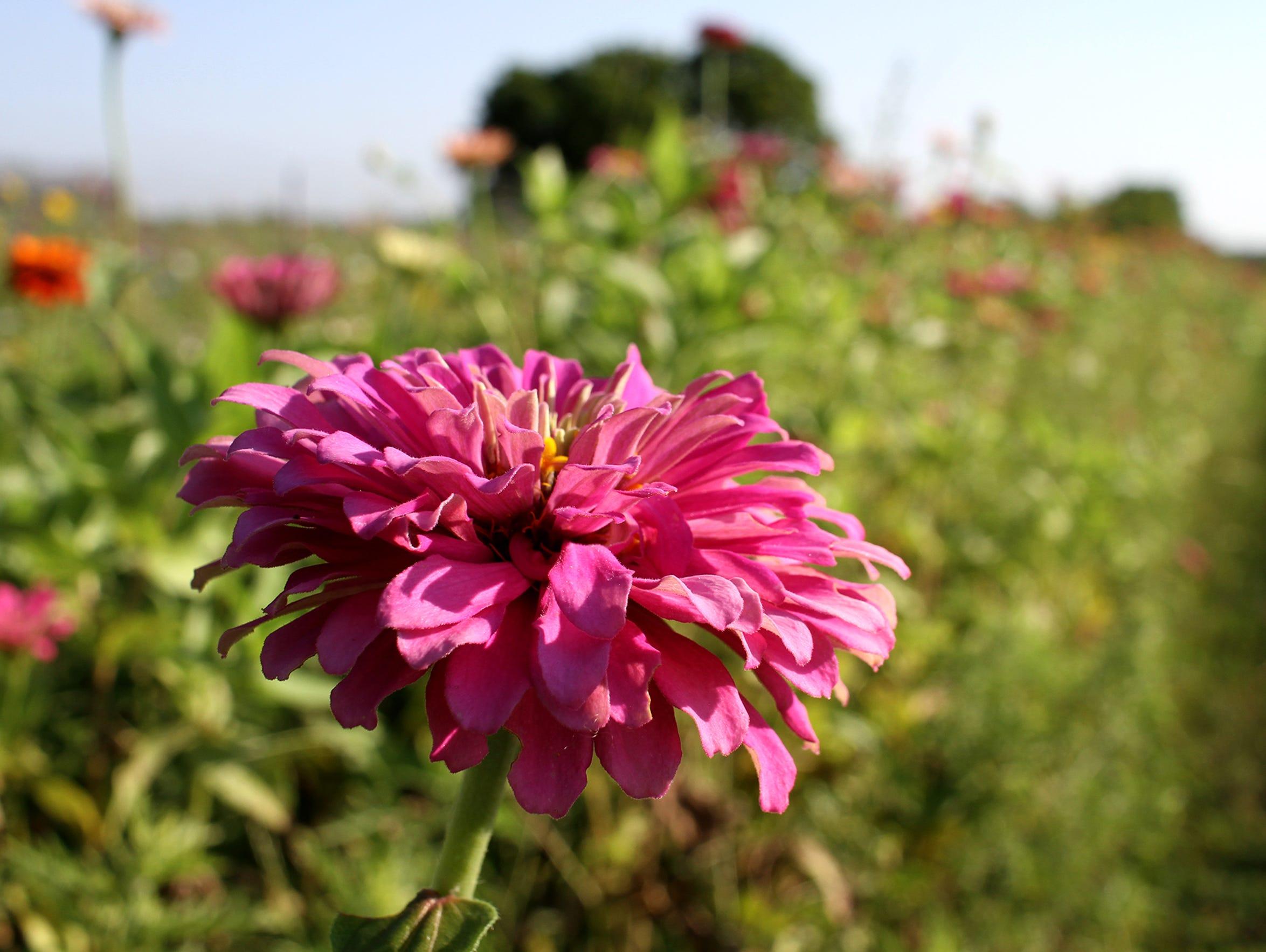 Flowers bloom at Gilbert Creek Gardens in Burkburnett.