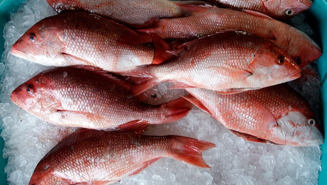 A bucket full of red snapper catch sits in Water Street Seafood in Apalachicola, Fla., May 5, 2010.