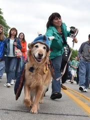 Dayton struts his stuff, with owner Nancy Woltzen of Milwaukee hanging on behind, after it was crowed Fur Ball chieftain following the pet parade at last year's Fyr Bal.