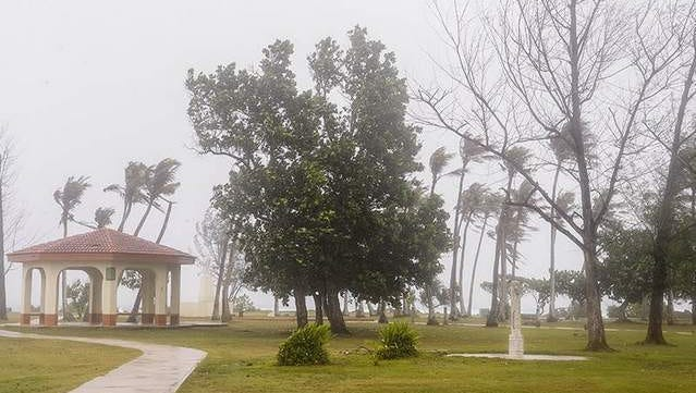 Trees bend and sway in the intensifying winds at the Paseo during the approach of Typhoon Dolphin yesterday.