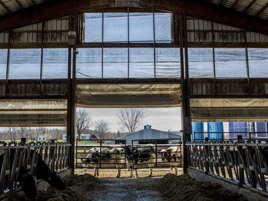Cows walk by a gate on an open-air barn Wednesday,